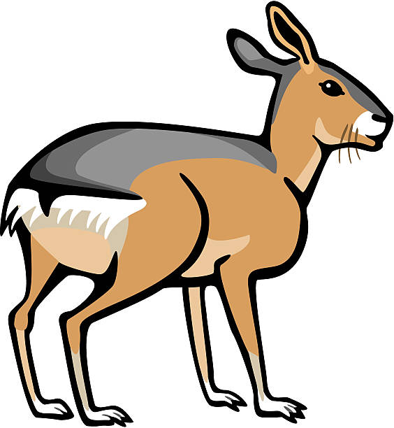 Patagonian Cavy Clip Art, Vector Images & Illustrations.