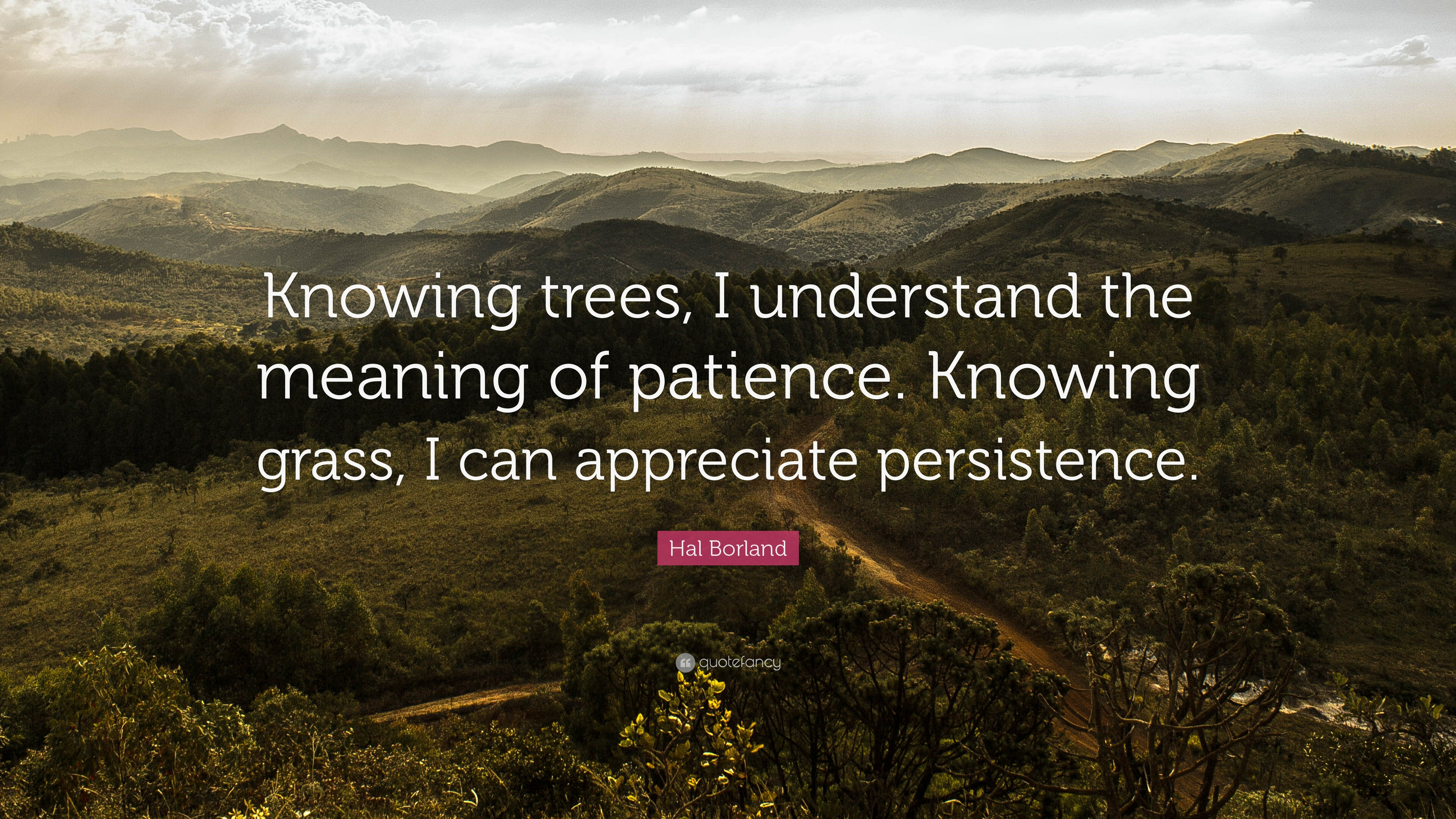 "Hal Borland Quote: ""Knowing trees, I understand the meaning of."
