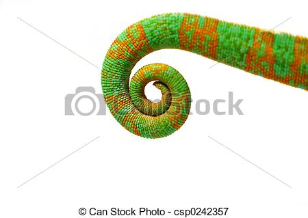 Picture of Chameleon Tail.