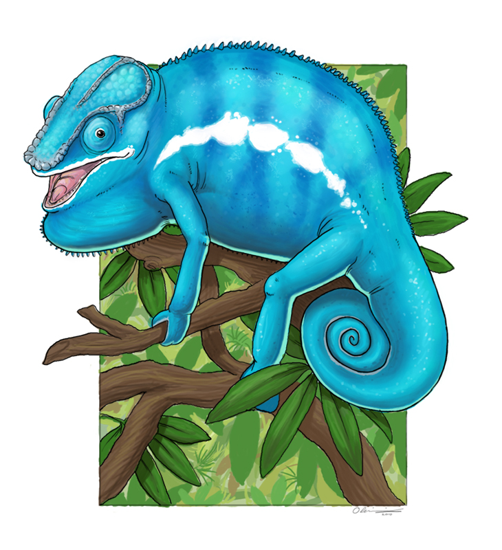 Nosy Be Panther Chameleon by Alkahla on DeviantArt.