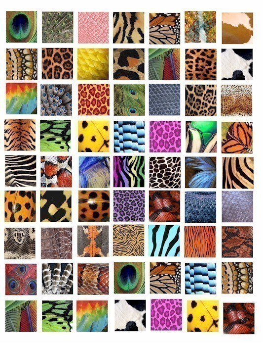 Animal Insect skin textures patterns clip art collage 1 inch.