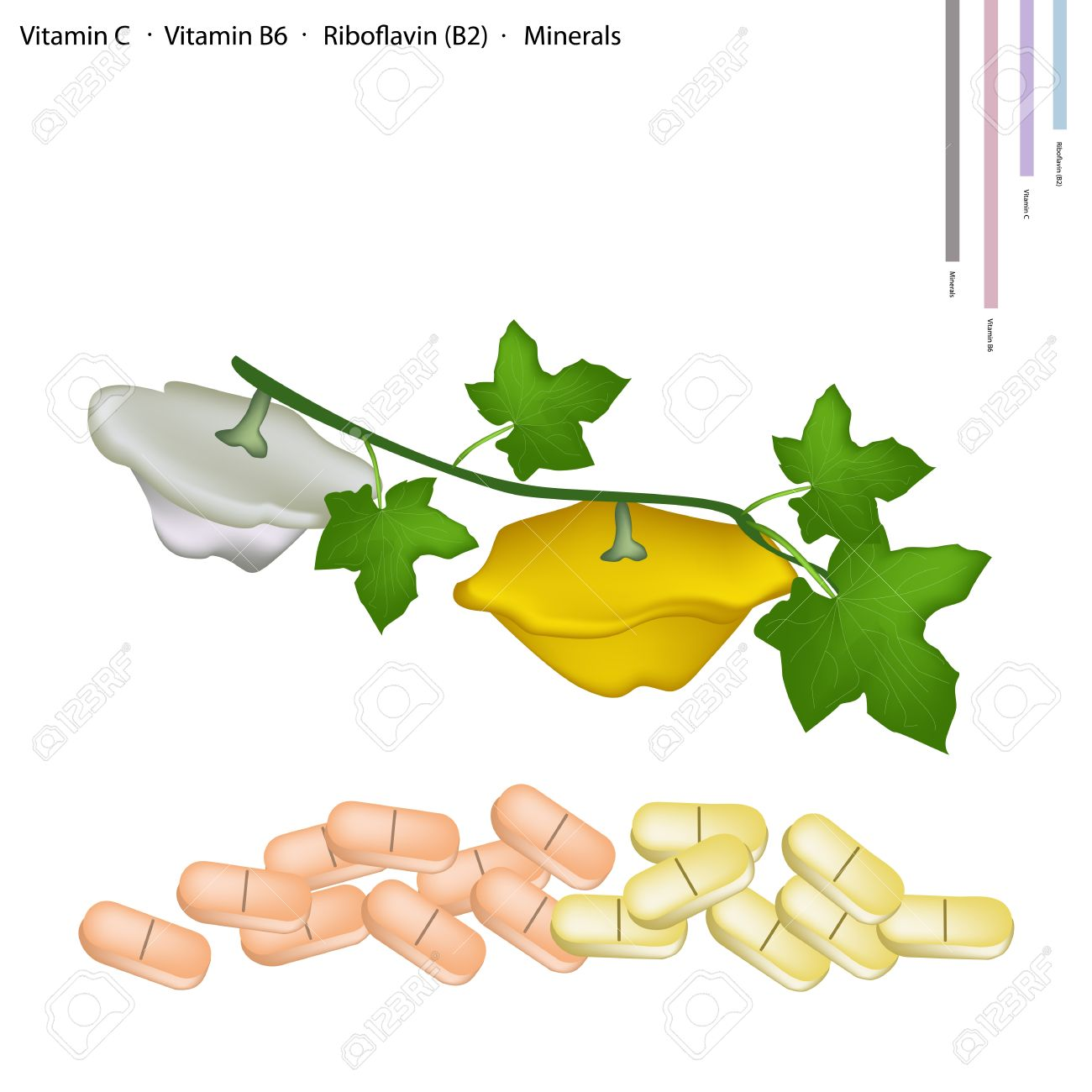 Healthcare Concept, Illustration Of Pattypan Squash Or Sunburst.