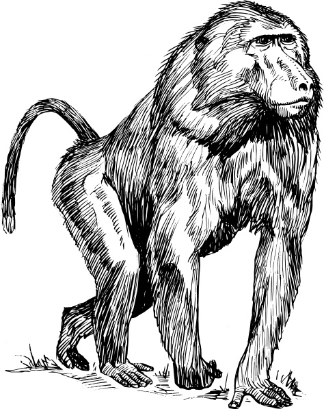 Free baboon vector free vector download (3 Free vector) for.