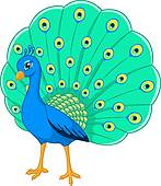 Peacock Clip Art and Illustration. 3,575 peacock clipart vector.
