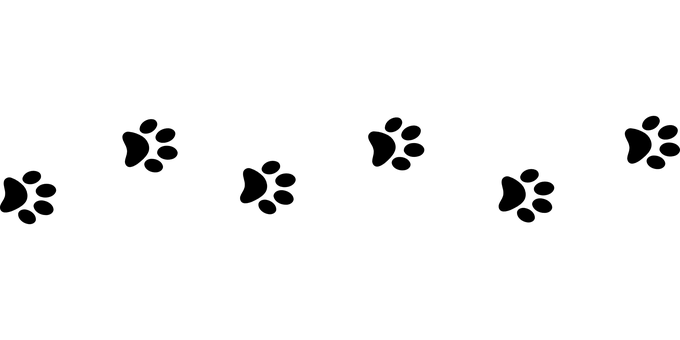 Line Of Paw Prints transparent PNG.