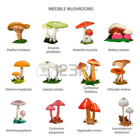 Paxillus Stock Photos Images. Royalty Free Paxillus Images And.