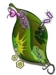 Fungal Biology » MycorWeb Fungal Genomics.