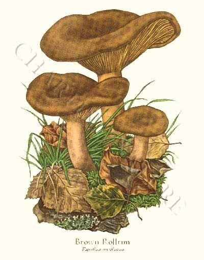 Mushroom Prints.