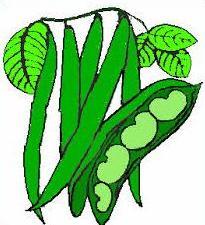 Free Pea Plant Clipart.