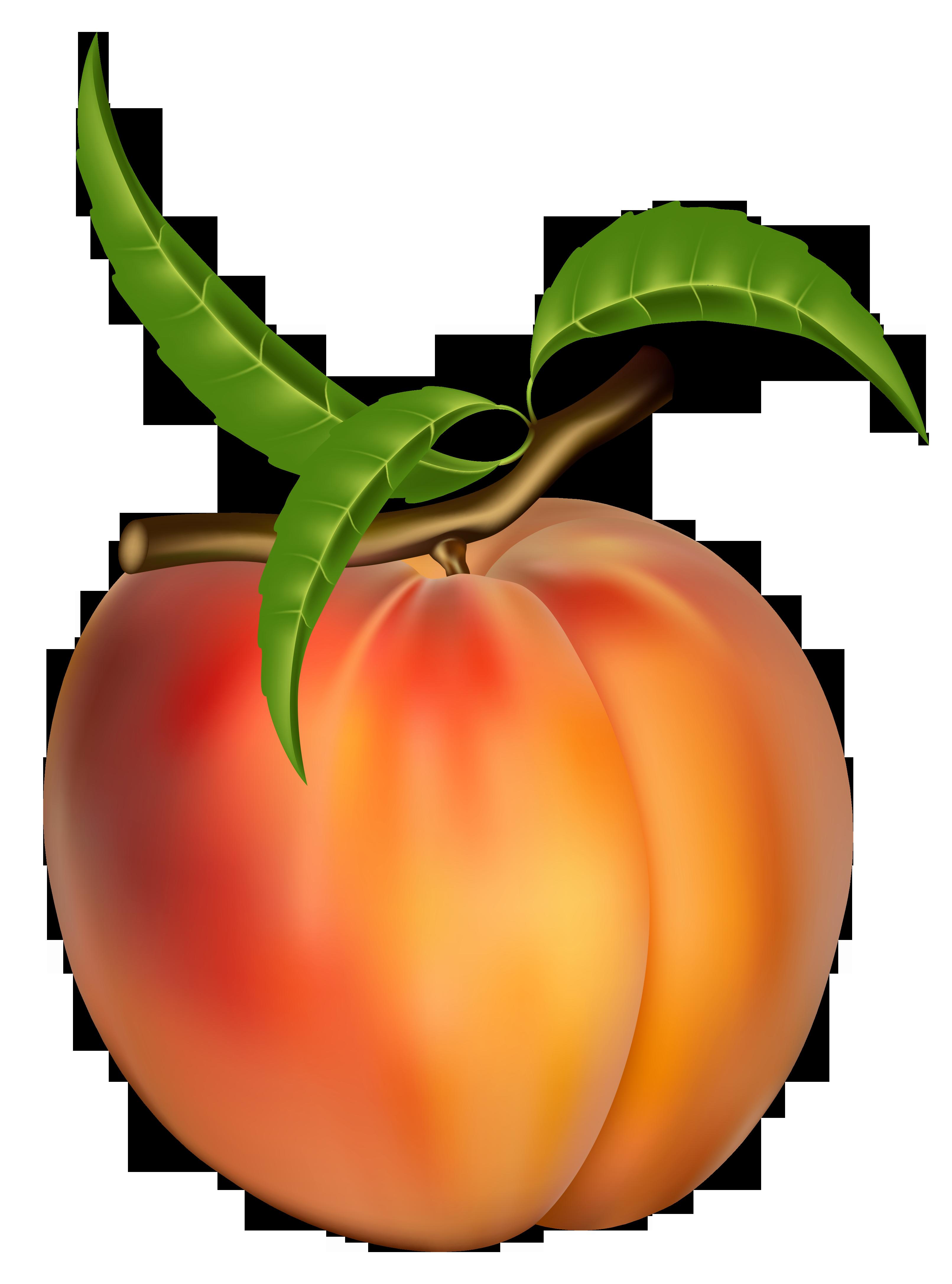 Peach Clipart Free.