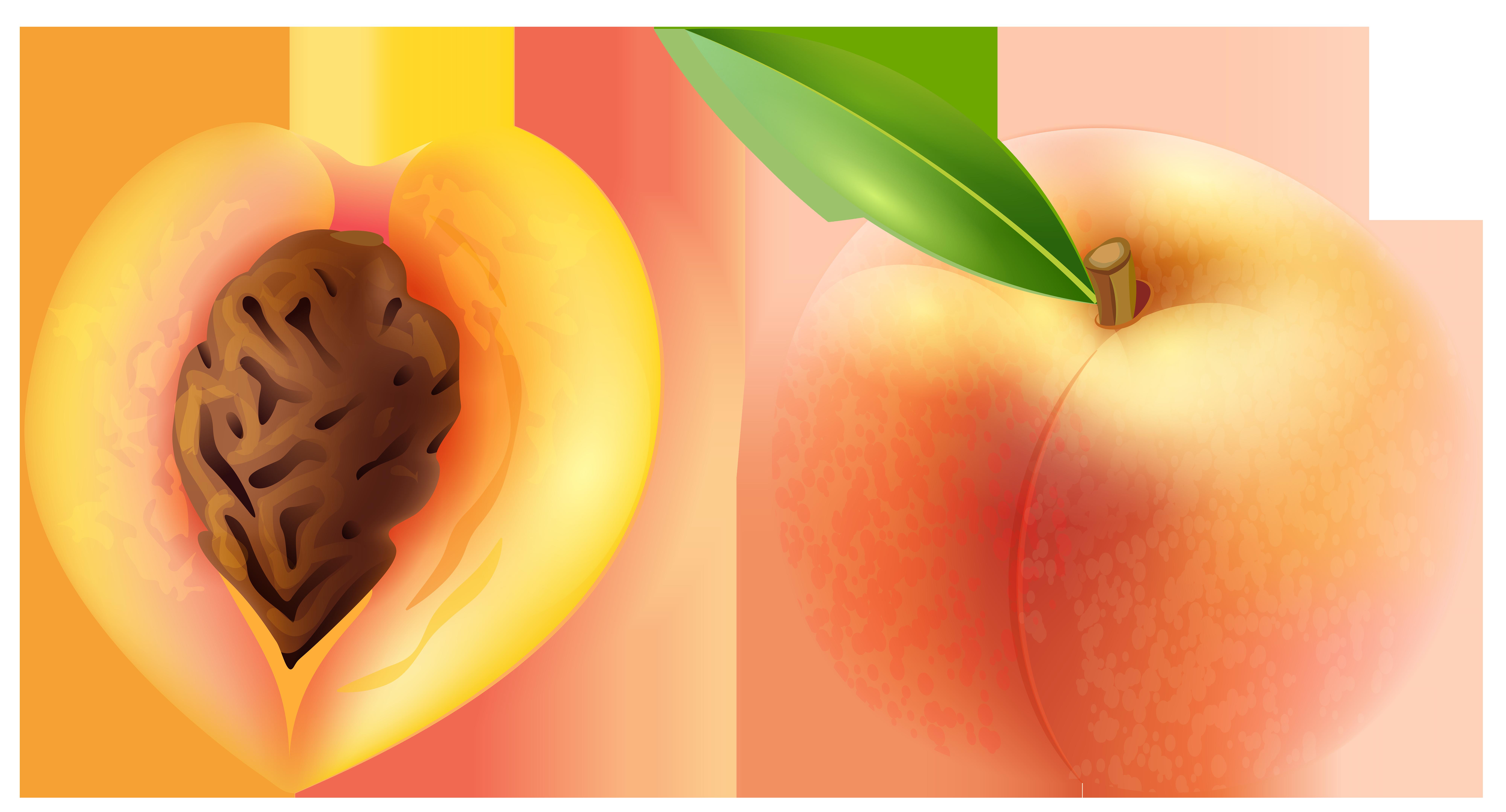 Peach Transparent PNG Clip Art Image.