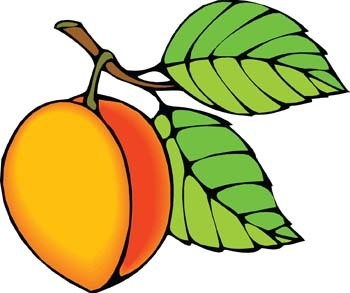 Peach clipart black and white free images 2.
