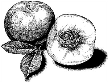 Peach clipart black and white free images.