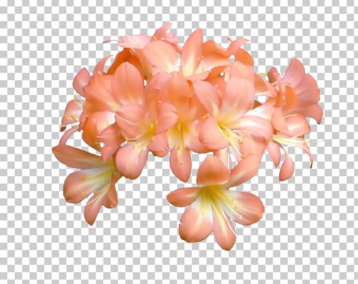 Peach Flower Blossom Orange Petal PNG, Clipart, Blossom.