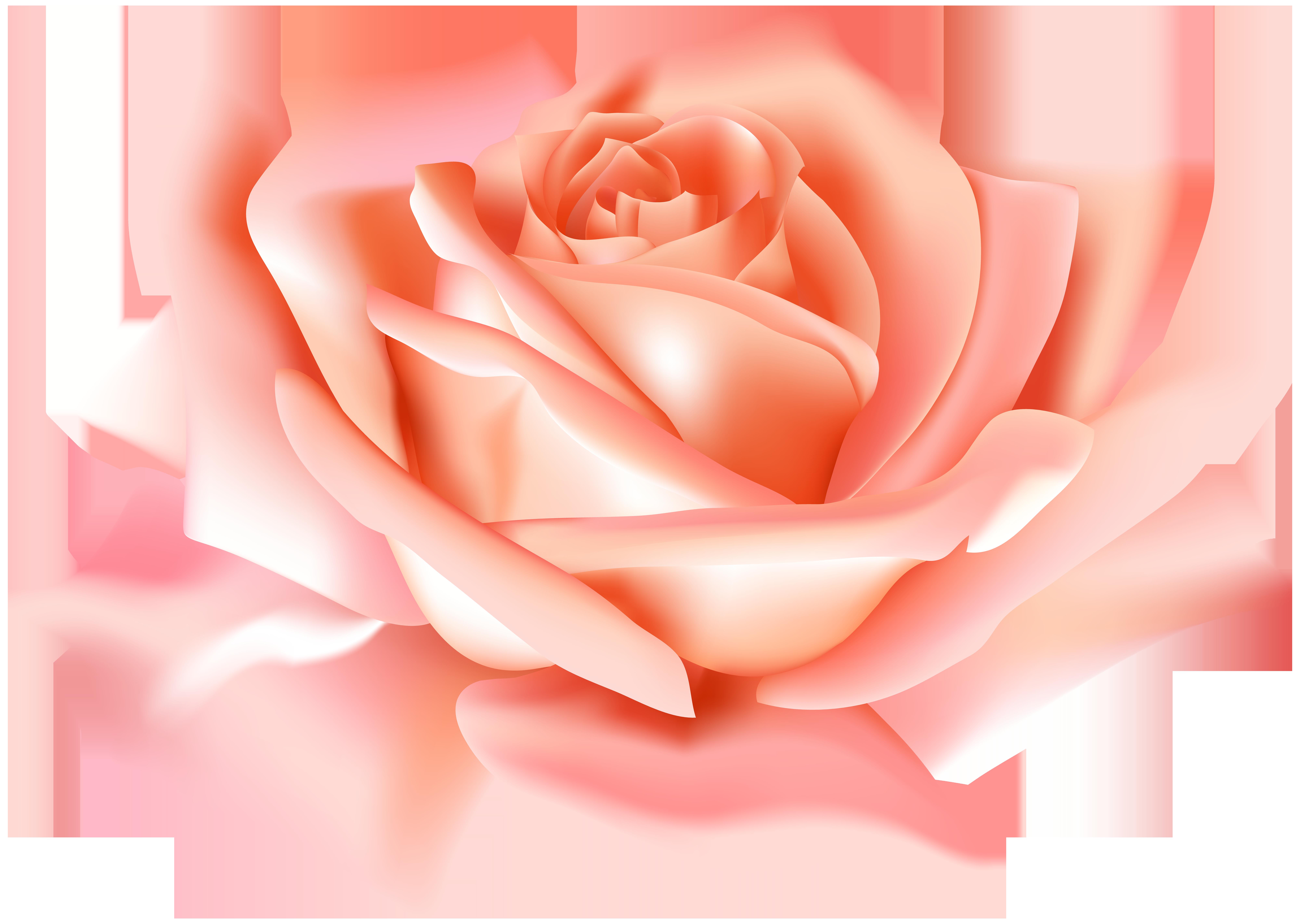 Peach Rose Flower PNG Clip Art Image.