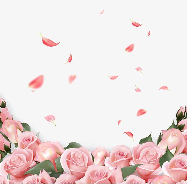 Rose, Background Decoration, Pink Flowers PNG Transparent.