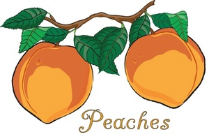 Peach tree clipart kid.
