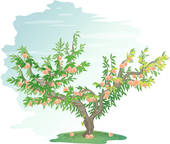 Clipart of peach, tree, plants, peach tree, fruit, icon, plant.