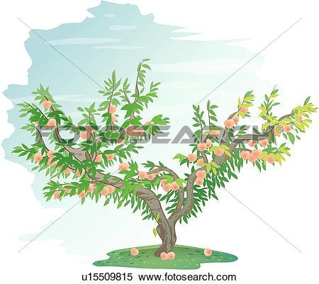 Peach tree Clipart Vector Graphics. 417 peach tree EPS clip art.