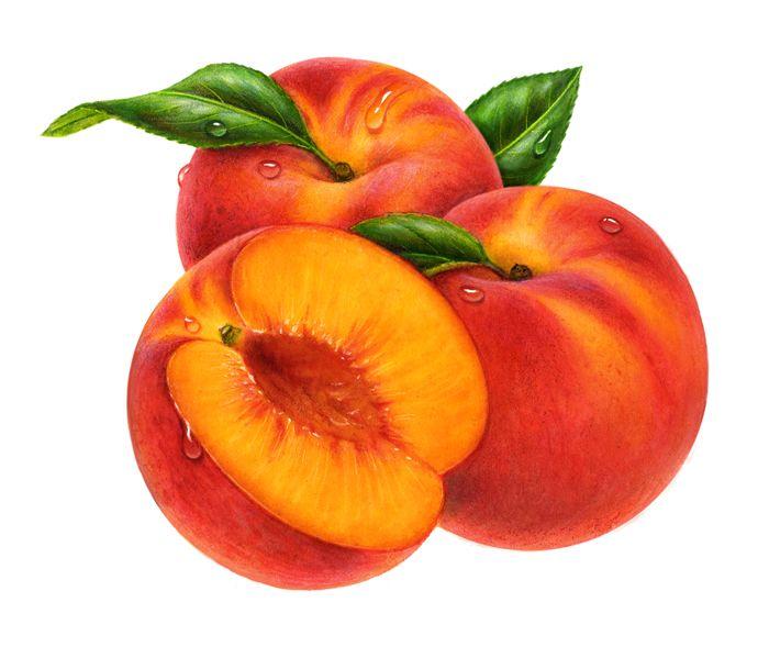 Peach so big cliparts free download clip art on.