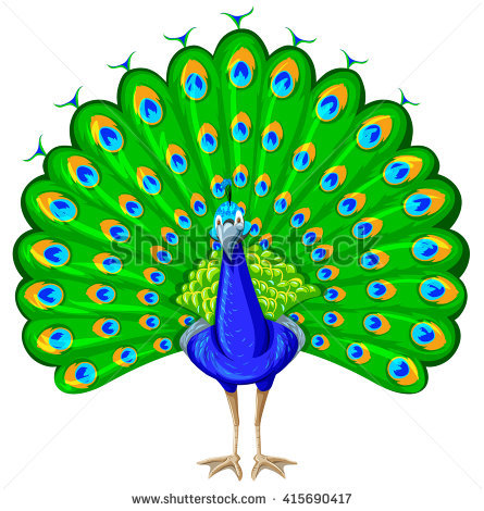 Peacock Clipart Clipground