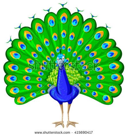 Peacock Clipart Stock Photos, Royalty.