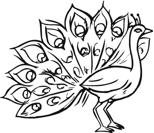 Free Black Peacock Cliparts, Download Free Clip Art, Free.