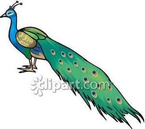 Peacock Clipart.