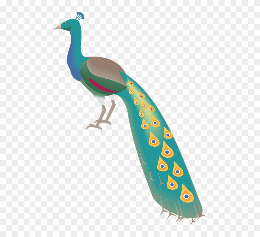 Free Peacock Clipart 11, Buy Clip Art.