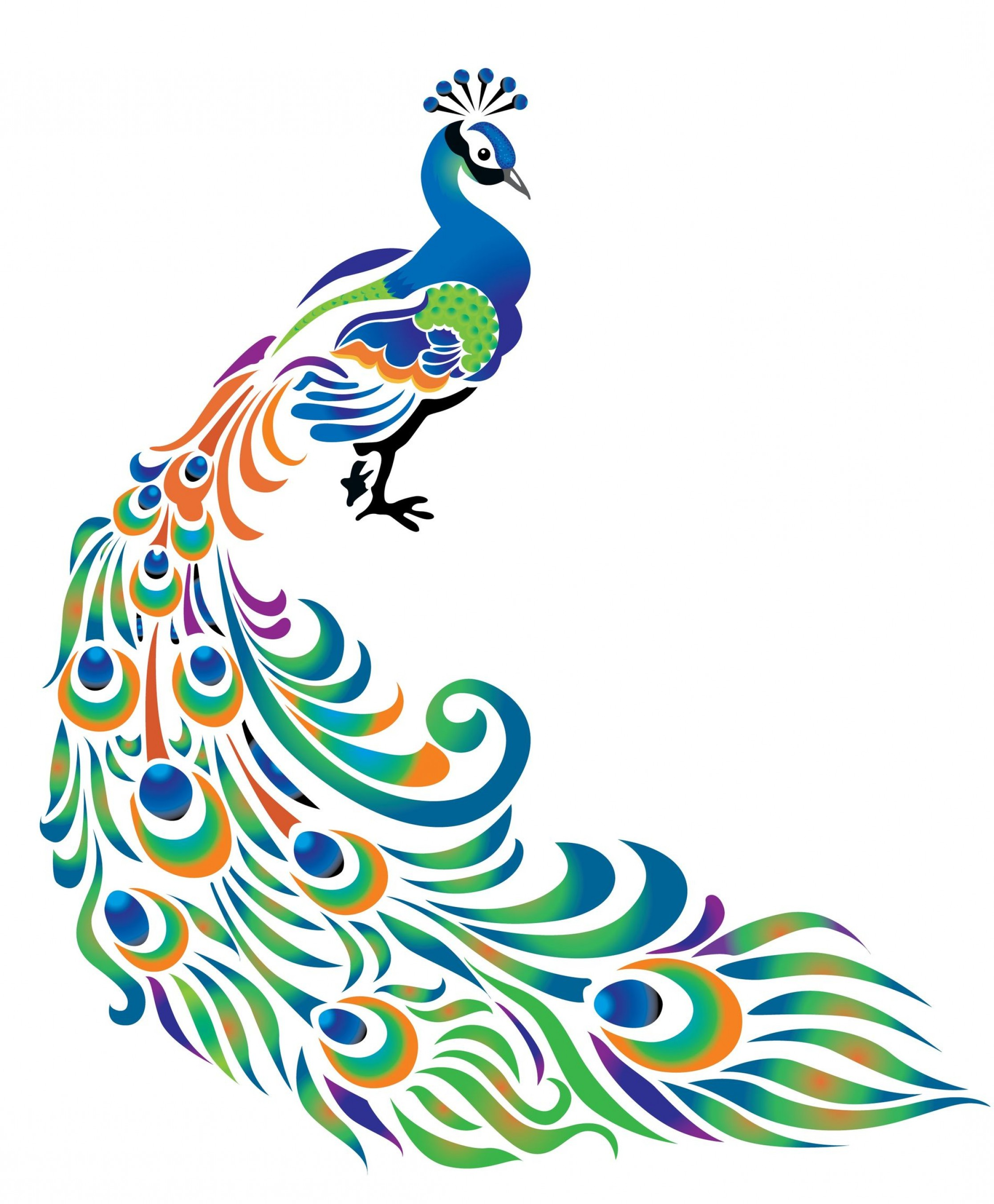 The Peacock: Vector Isolated Peacock Feather, Free Peacock Free.