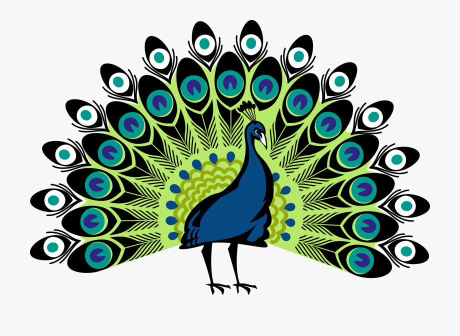 Peacock Png.