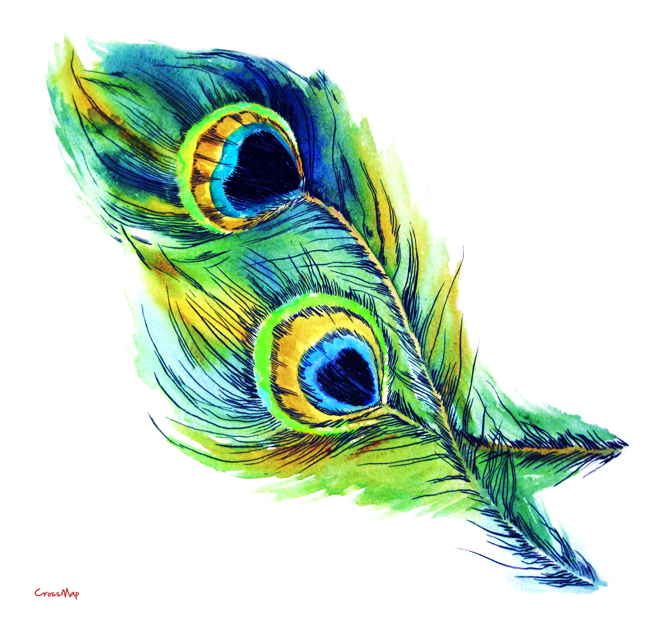 Free Peacock Feather, Download Free Clip Art, Free Clip Art.