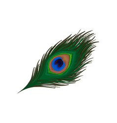 Peacock Feather Clipart Vector Images (39).