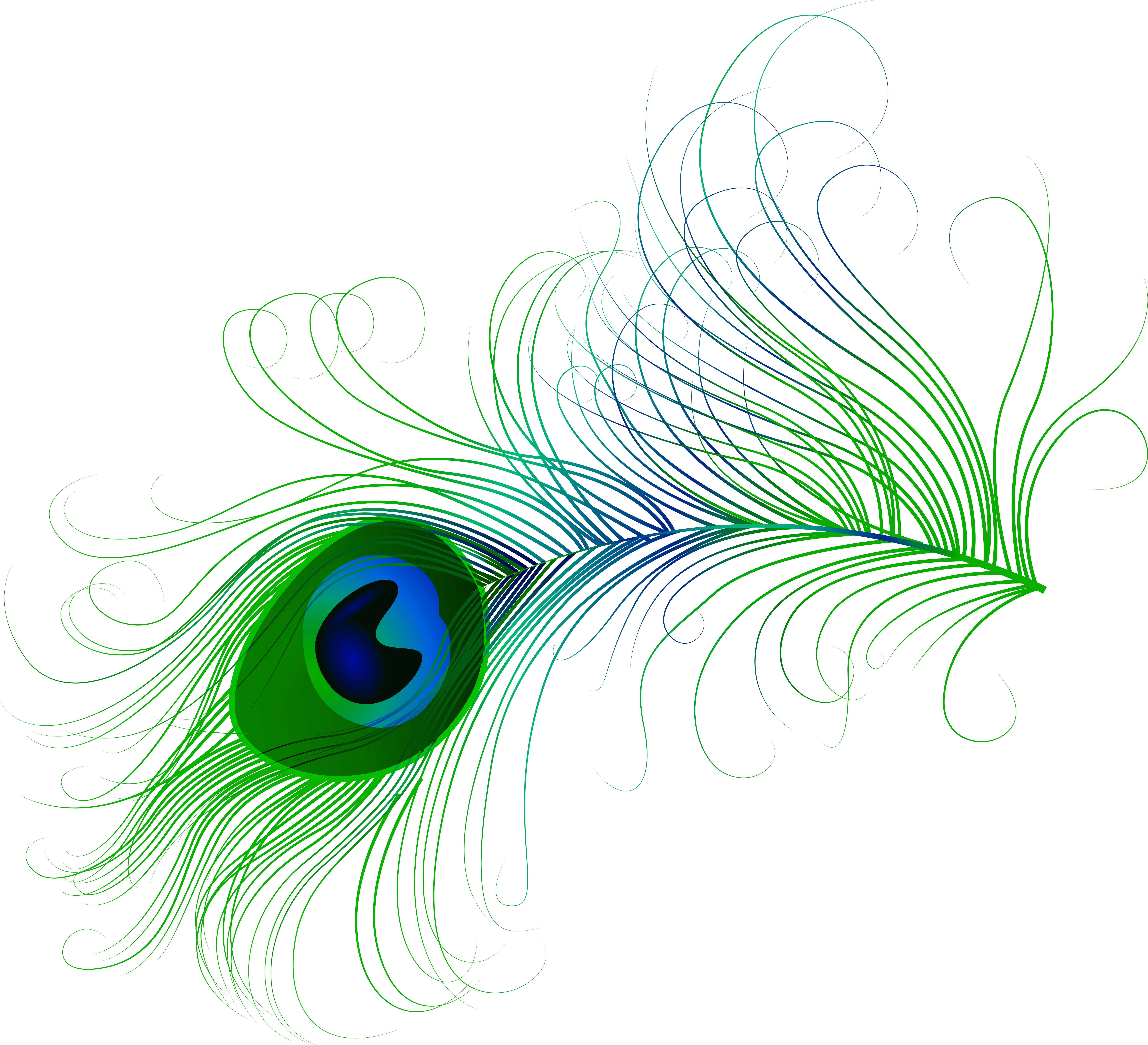 Peacock Feather PNG Clip Art Image.