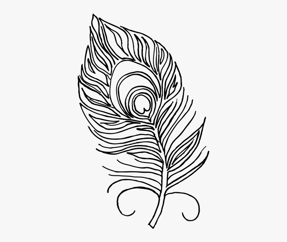 Peacock Feather Clipart Black And White.
