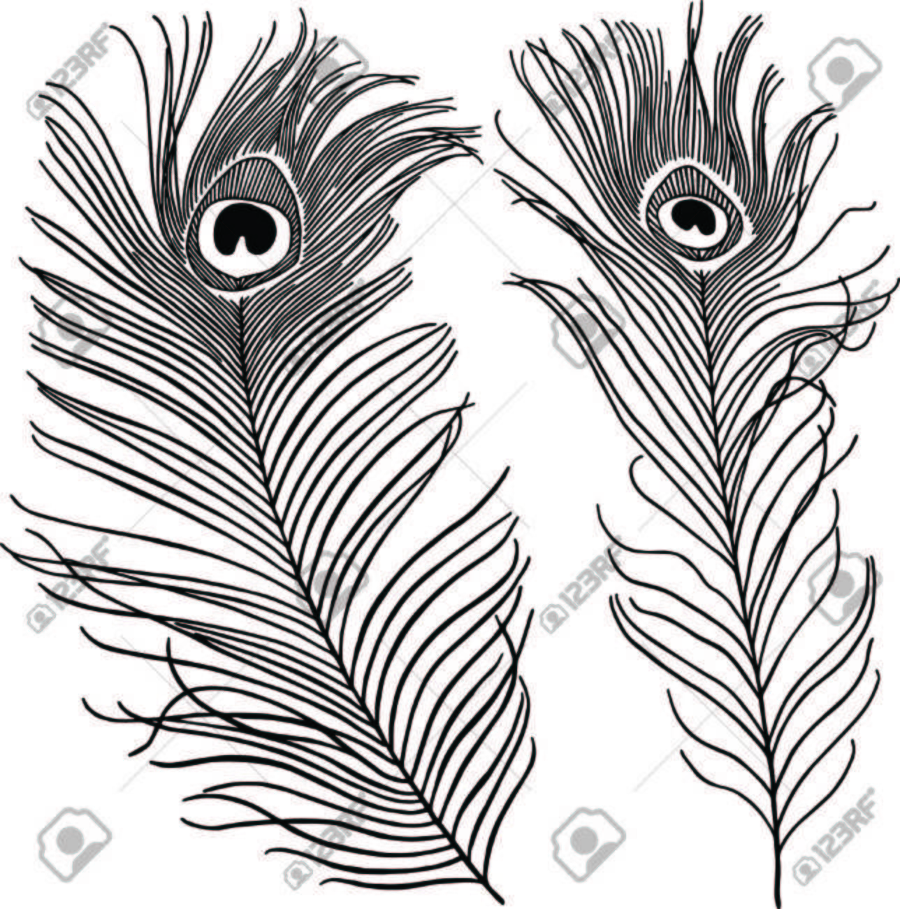 Peacock feather clipart black and white 7 » Clipart Station.