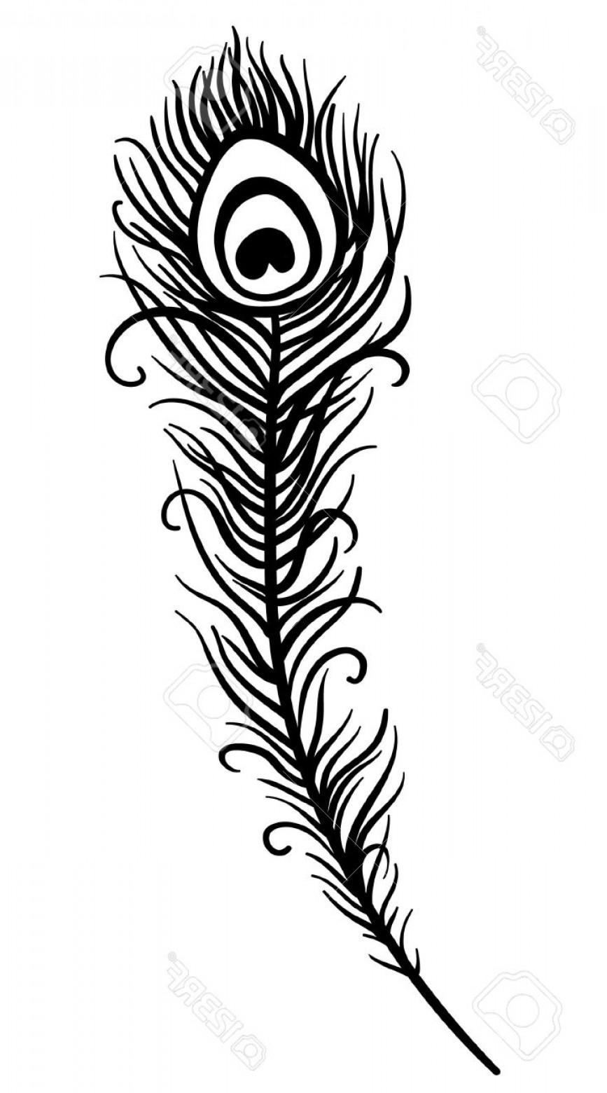 Peacock Feather Vector Clip Art.