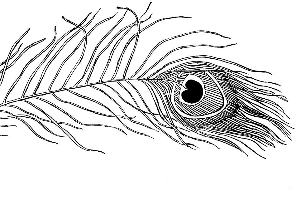 Free Peacock Feather Image.