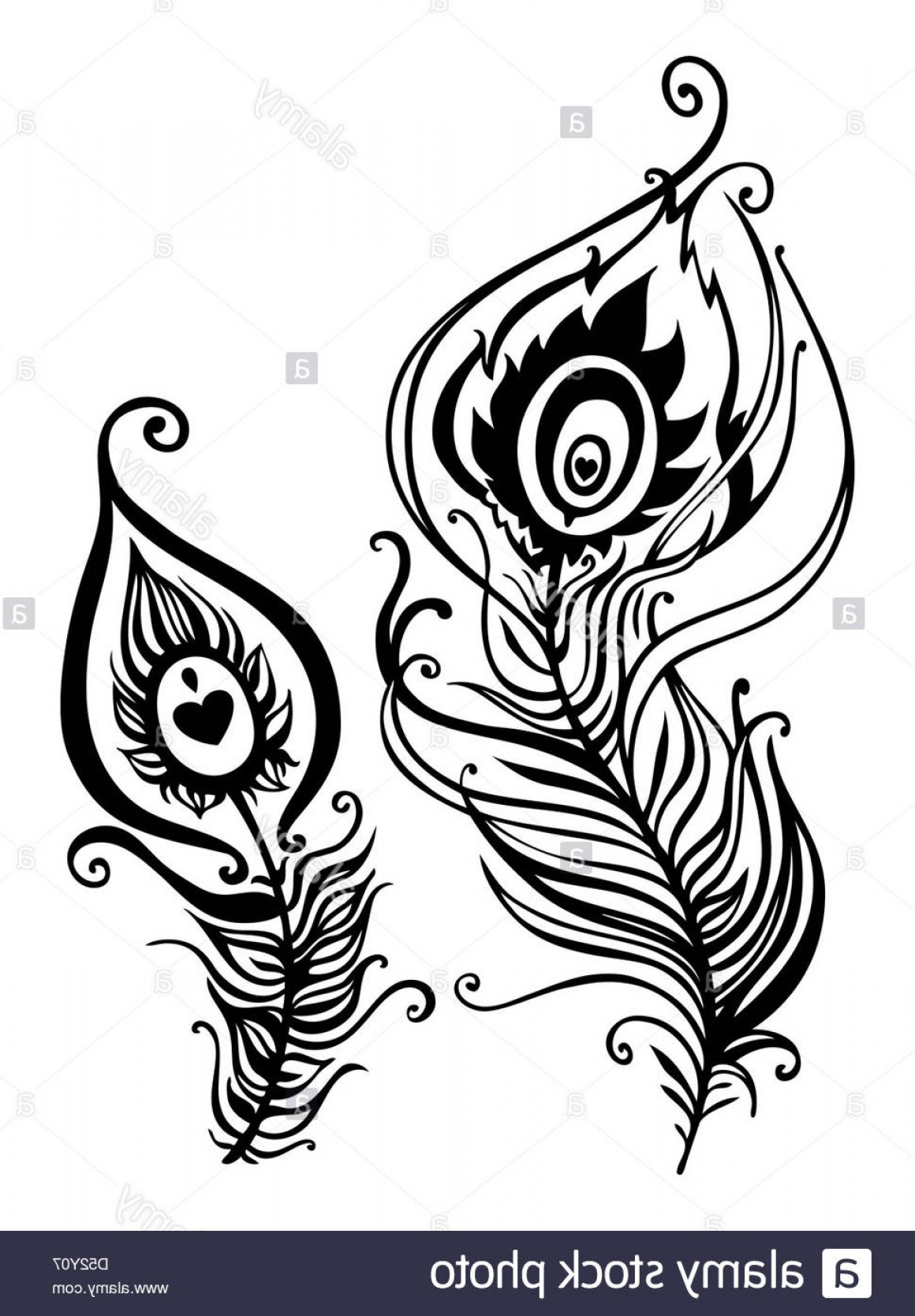 Stock Photo Beautiful Peacock Feather Vector Illustration.