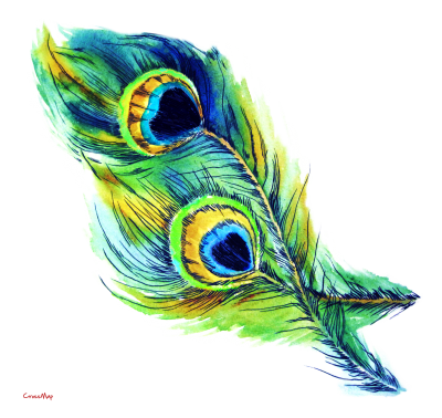 Download PEACOCK FEATHER Free PNG transparent image and clipart.