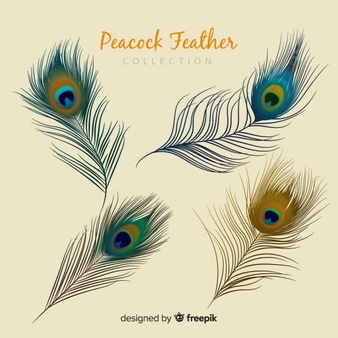 Peacock Feather Vectors, Photos and PSD files.