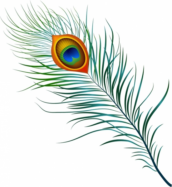 Peacock Feather Free vector in Adobe Illustrator ai ( .AI.
