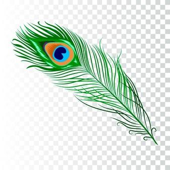Peacock Vectors, Photos and PSD files.