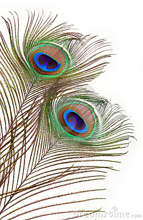 Clip Art of a Peacock Feather.