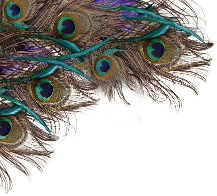 Free Peacock Feather PNG Transparent Images, Download Free.