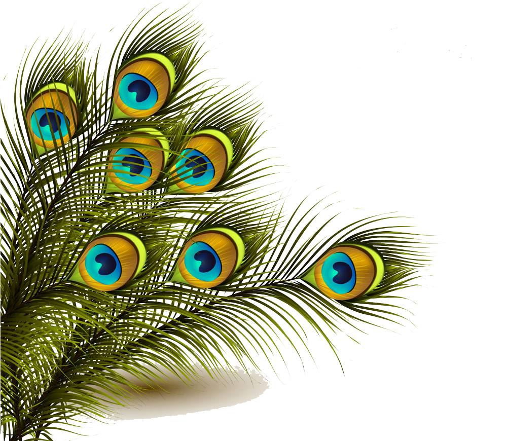 Peafowl Feather Clip art.