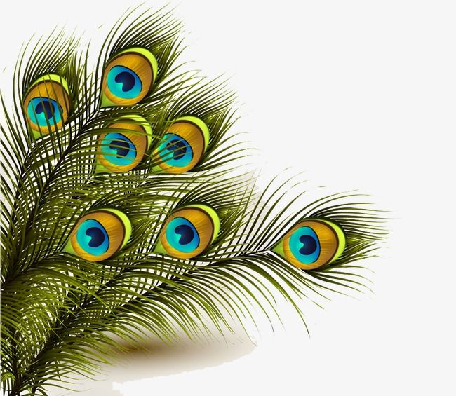Peacock Feather, Peacock Clipart, Feathers Background PNG.