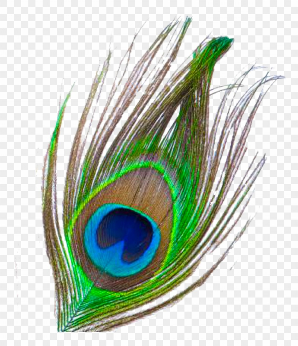Miiadhznmor Pankh Clipart Peacock Feather Png File.
