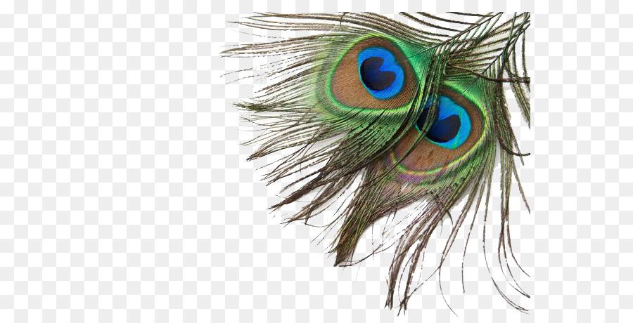 Bird Feather Peafowl.