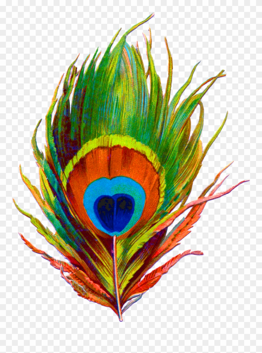 Peacock Feather Png Designs Clipart (#1987109).